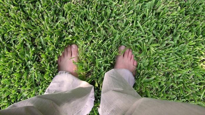 Så gräs på våren
