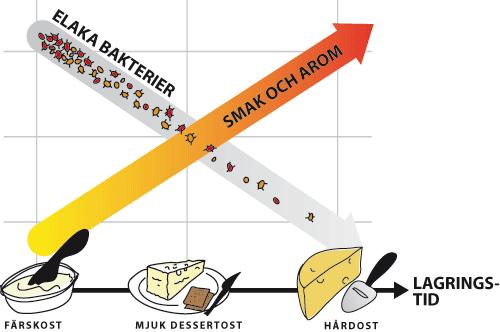 vad är opastöriserad ost