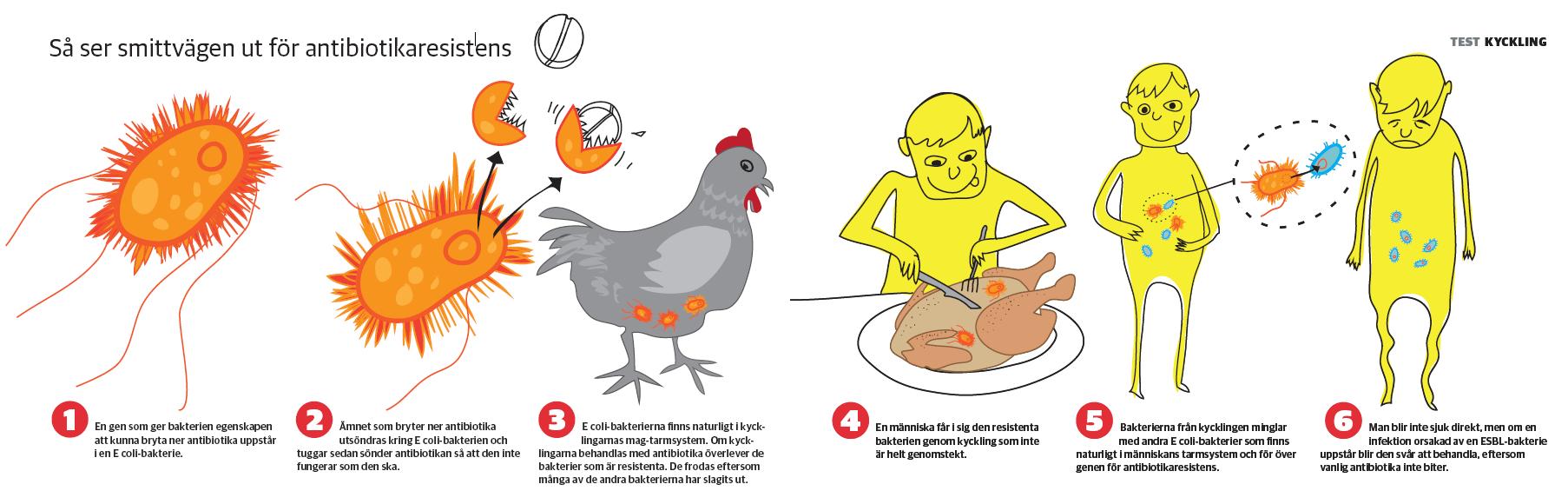 vad är kyckling bra för